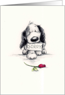 The sad looking dog apology to someone special. card