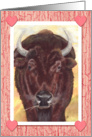 Buffalo Bison Hearts Happy Valentines Day card