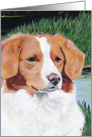 Nova Scotia Duck Toller Retriever Dog Breed Painting Puppy to Adult card
