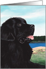 Newfoundland Black Newfie Dog Sympathy card