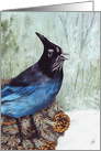 Stellar's Jay, Songbird, Feeling Blue, Encouragement card