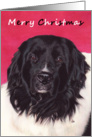 Landseer Newfoundland Dog Painting Merry Christmas card