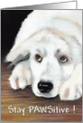 Stay PAWSitive Canine Painting card