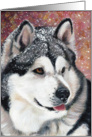 Alaskan Malamute Dog Breed Painting Portrait card