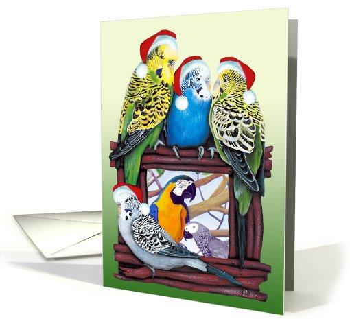 Budgie Parakeet YOUR Pet Parrot Photo Card Here Season's... (878913)