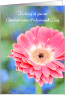 Administrative Professionals Day Thinking of You Pink Gerbera Daisy card