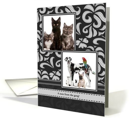 Black and Gray Flourishes, Any Occasion, Blank Inside, Photo card