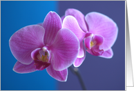 Friend Birthday Orchid card