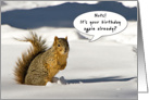 Humorous squirrel - Happy Birthday card