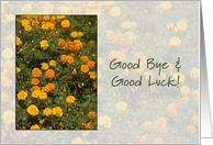 Good Bye and Good Luck - golden marigolds card