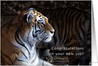 tiger, congratulations on your new job card