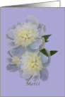 Thank You, French, Merci, White Peony Flowers card