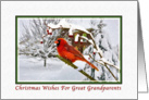 Christmas Wishes, Great Grandparents, Cardinal Bird, Snow card