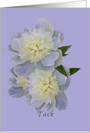 Thank You, Swedish, Tack, White Peony Flowers card
