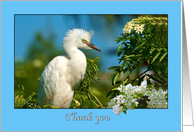 Thank You, Immature Snowy Egret card