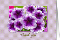 Thank You, Purple and White Petunias card