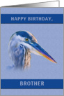 Birthday, Brother, Great Blue Heron card