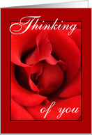 Thinking of you to my Love - Red Rose card
