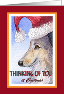 Thinking of you at Christmas, Sheltie in a Santa hat card