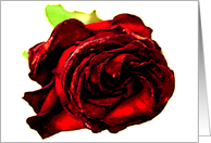 a rose for mom card