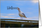 Hello, Humor, Funny, Screaming Seagull from the Rooftop card