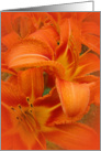 Blank, Tiger Lilies Cluster card