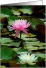 Wedding Maid of Honor, White and Pink Water Lily card