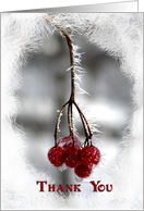 Thank You - Frosty Red Berries card