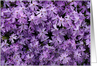 get well soon: purple phlox card