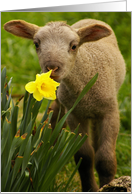Happy Easter: Lamb with Daffodil card