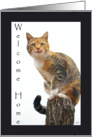 Welcome Home From Pet: cat card