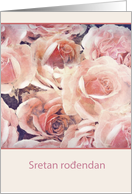 Happy Birthday in Croatian, cream and pink roses card