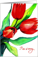 I'm Sorry, Apology, Three Red Tulips, Watercolor Painting card