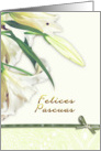 felices pascuas,spanish happy easter,white lily card