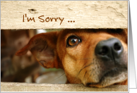I'm Sorry, Dog Looking Through Wooden Fence Apology card