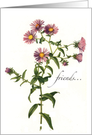 Thank You to Friend with Aster Flowers, Nature card