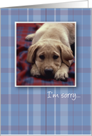 I'm Sorry Dog card