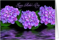 Happy Mother's Day, purple hydrangeas with water reflection card