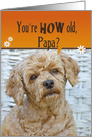 Papa's Birthday humor, brown poodle with orange border card