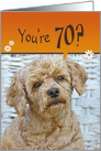 70th Birthday, cute brown poodle with humorous expression card