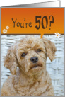 50th Birthday - poodle with a humorous expression card
