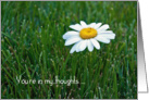 Thinking of You-daisy in grass card