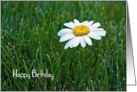 general birthday-close up of a single white daisy in grass card