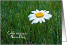 Sister's Name Day-close up of a single white daisy in grass card