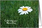 Wife's Name Day close up of a single white daisy in grass card