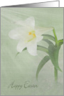 Easter- white Easter lily with soft sunlight and textured overlay card