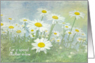 Mother-in-law's Birthday-white daisies in field with soft texture card