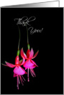 Thank You-close up of bright pink fuchsia blooms on black card