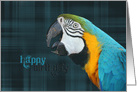 parrot portrait on plaid background for birthday card