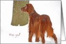 Missing You Irish Setter dog portrait in snow card